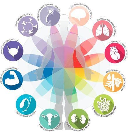 Изображение для категории Регуляторы систем и функций организма